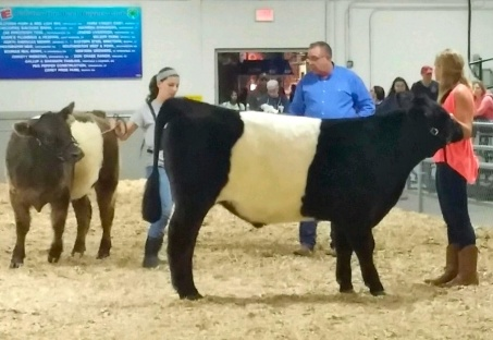 Winston first, Mikey second in collegiate showmanship at Big E