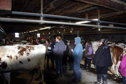 Students visit with Gay Rogers and her Ayrshires at Hameau Farm in Belleville, P