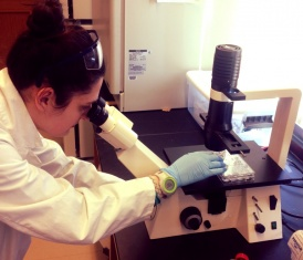 Vicky Mello '15 looking through microscope